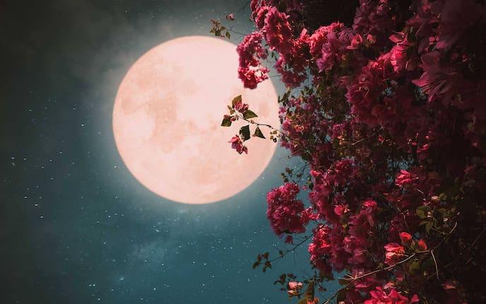 Mond, Vollmond, Mondkalender, Blüten