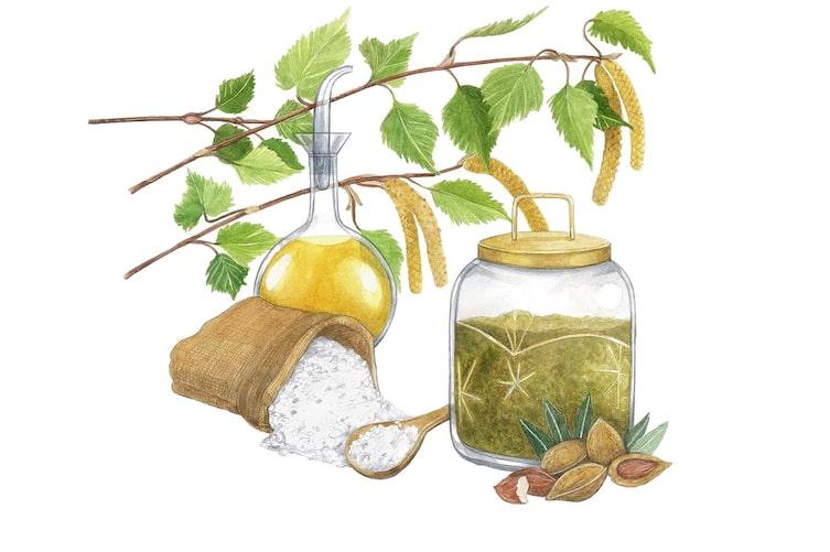 Naturkosmetik, Birke, Birkenkätzchen, Meersalz, Mandelöl, Illustration