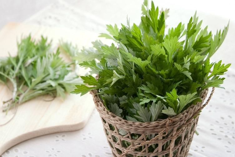 Beifuß, Heilpflanze, Verdauung, Naturheilkunde, Naturapotheke