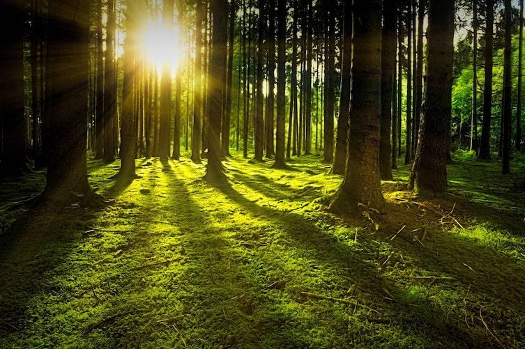 So gesund ist Waldbaden (Bild: Pixabay)