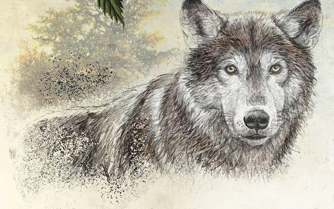 Wolf (Illustration: Andreas Posselt)