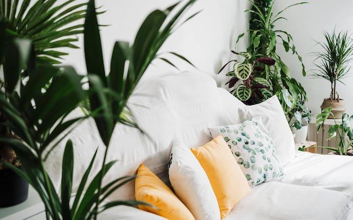 Pflanzen, Zimmerpflanzen, Wohnraum, Wohnzimmer