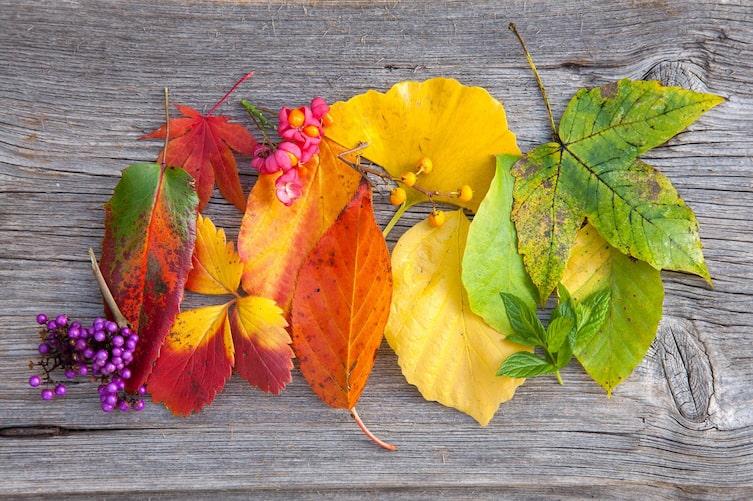 Bunte Herbstblätter (Foto: Mauritius Images)