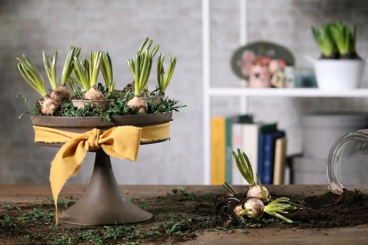 Frühlingsgesteck, Gesteck, Blumenzwiebeln, Frühling, Deko