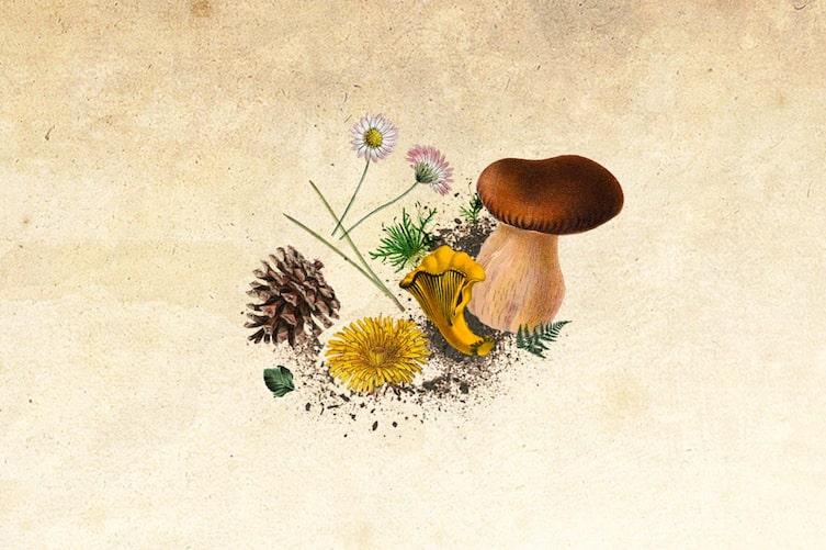Plant, Fungus, Mushroom