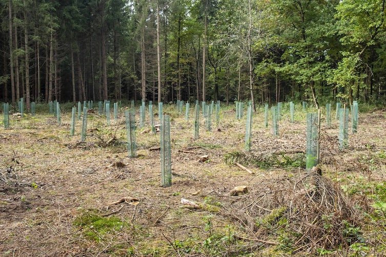 Neu bepflanzte Lichtung im Terra Mater Wald