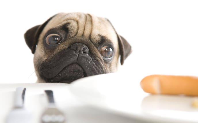 Mops, Wurst, Hunde, Ernährung