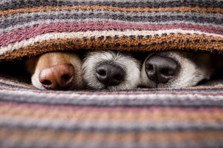Wissenswertes rund um die Hundenase (Foto: i Stock)