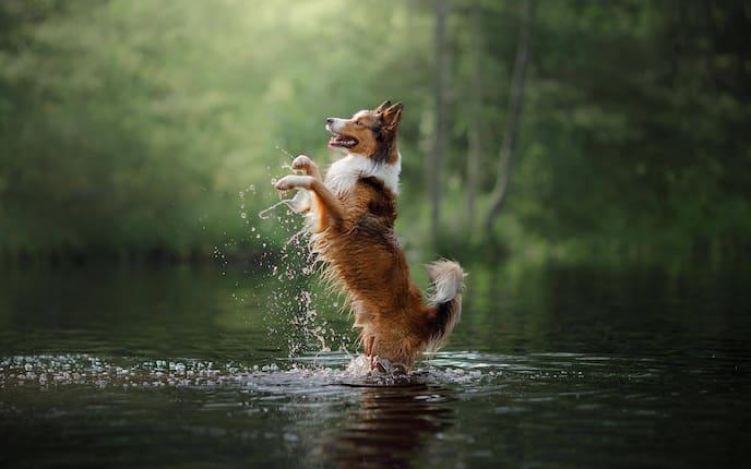 Tiere, Tierwissen, Hund, Wasser, Schwimmen, Teich, Pool, Meer, See