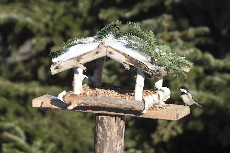 Richtig Vögel füttern: Vogelfutterhaus mit Tannenmeise (Bild: Mauritius Images)