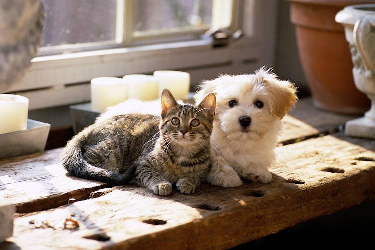 Naturapotheke für Hund & Katze (Foto: Mauritius Images)