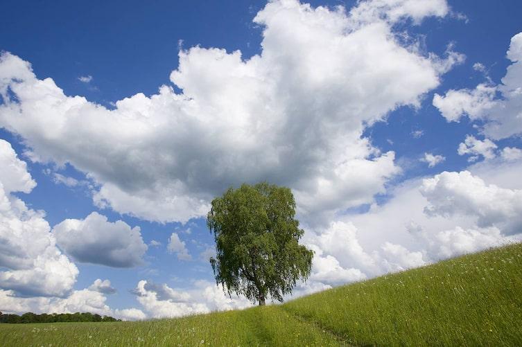 Was Wolken über das Wetter verraten - Schönwetterwolken, Quellworlken (Bild: Mauritius Images)