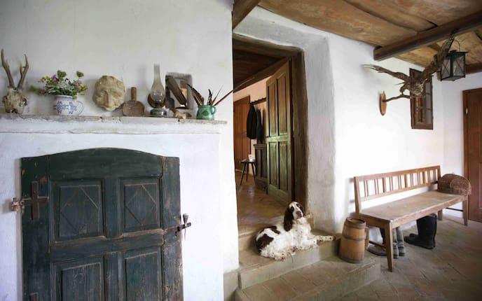 Wohnen, Hausbesuch, Jennersdorf, Hunde, Springer