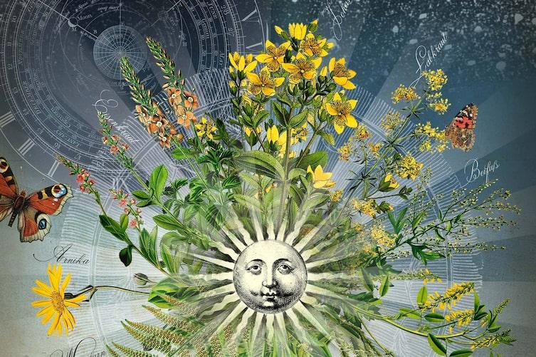 Blumen, Zeit, Illustration, Zeitmessung