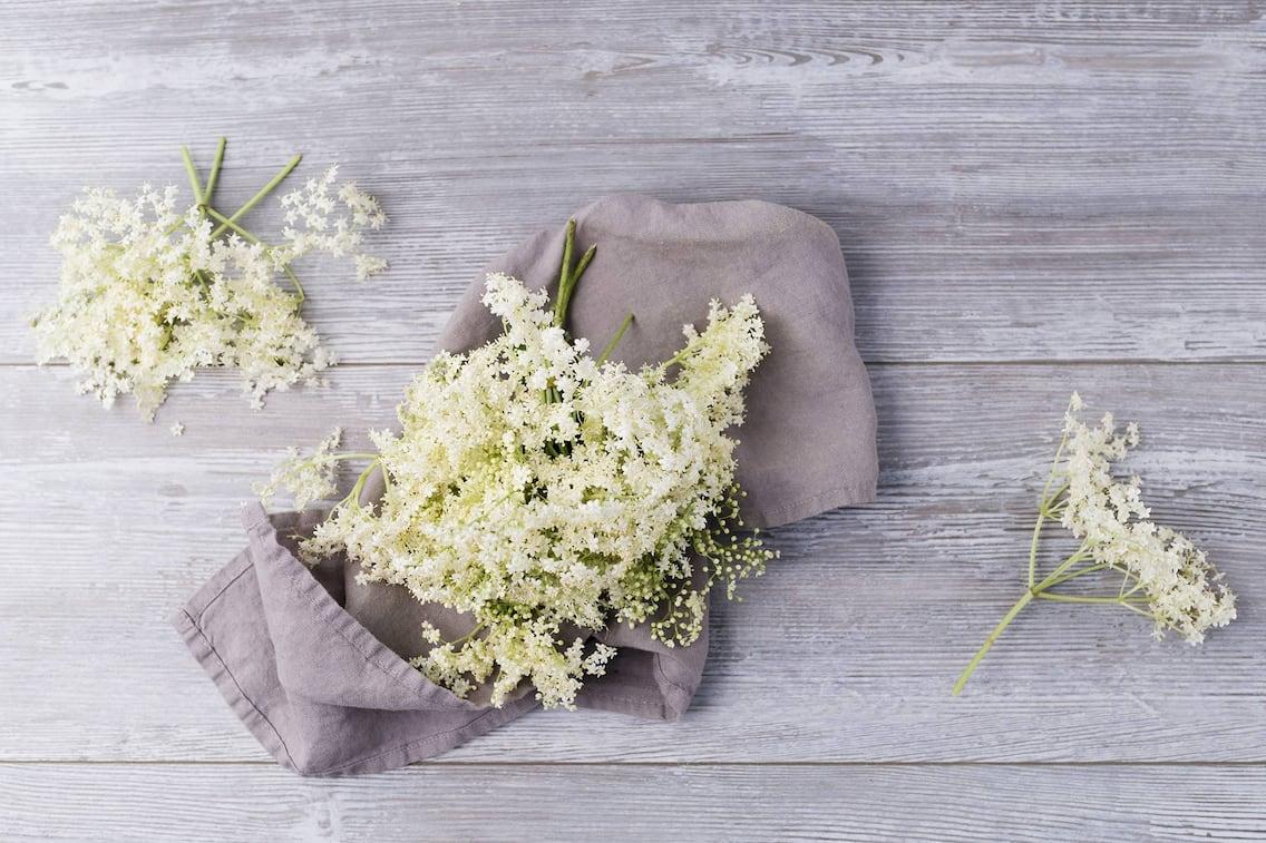 Holunderblüten, weiße Blüten