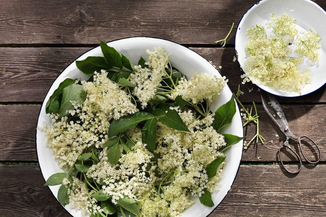 Holunderblüten in einer Schale, Rezept